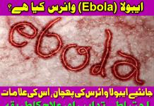 Tips Urdu Ebola Virus Disease Symptoms Care Causes and Treatment Pakistan