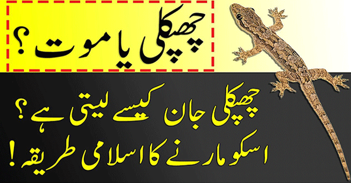 Get Rid of Common House Geckos and Lizards