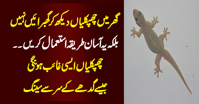 Get Rid of House Lizards (Chipkali) Best Home Remedies