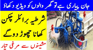 Side Effects Of Eating Broiler Chicken