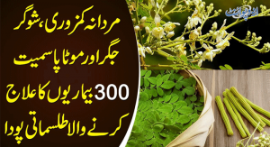 Moringa Tree Benefits for Health