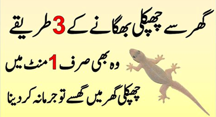 Remove Lizards from Your Home and Kitchen